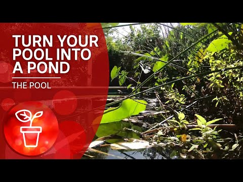 Converting A Saltwater Pool Into A Natural Swimming Pool | The Pool