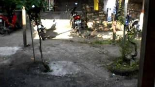 Download VIdeo Mesum Mahasiswa Bali