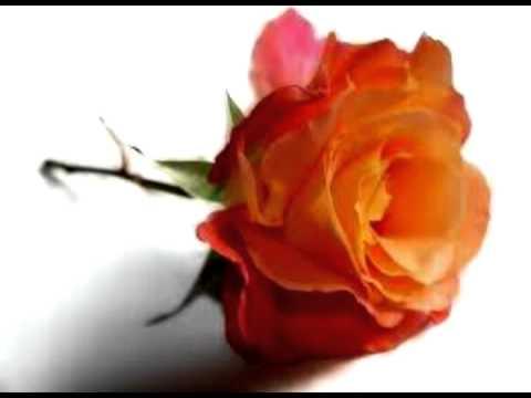 irmelin rose.mpg