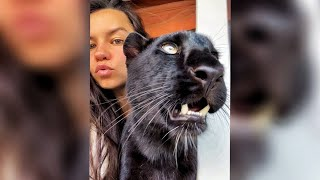 Luna the panther is talking 🐆/ The voice of the Leopard