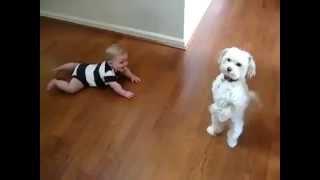 Малыши и собаки. Позитивное видео