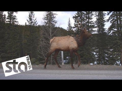 Winter adventures in Alberta, Canada   STA Travel