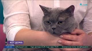 Смотреть видео День кота (телеканал Санкт-Петербург) онлайн