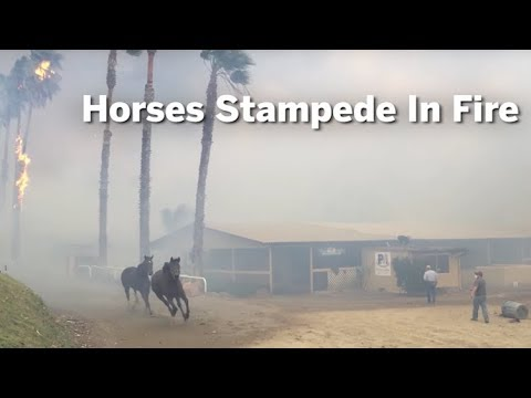Horses Stampede In Fire | San Diego Union-Tribune