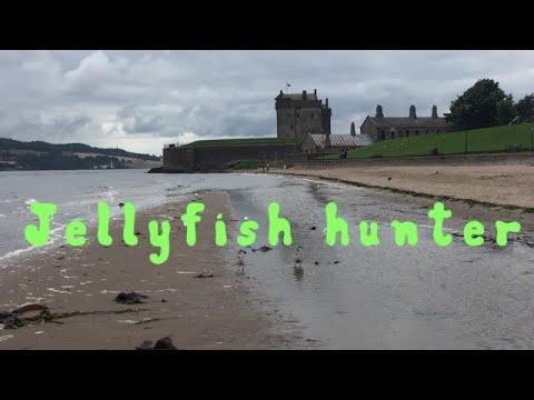 Jellyfish Hunter.