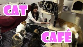 CAT CAFÉ / NEKO CAFÉ - Japão Nosso De Cada Dia