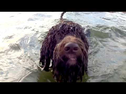 Barbet Sifra in the sea!