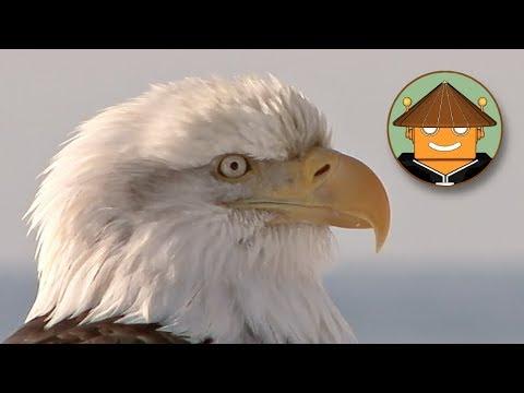 Download Qué Pasa con las Águilas l Mini Documental