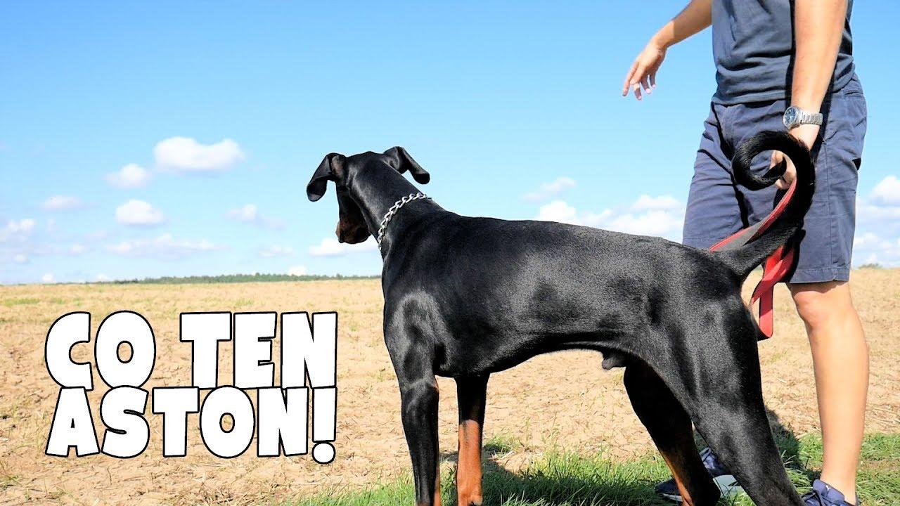 Pies mnie olał, serio! +Biedny Mersejdis ;(   Vlog 5/30