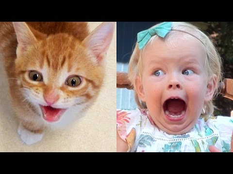 Cats Or Kids? Choose Yourself!