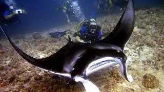 Подводный мир Индийского океана
