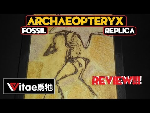 Vitae Archaeopteryx Fossil Replica Review!!!