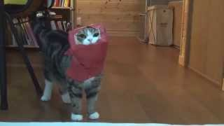 vuclip 赤い紙袋とねこ2。-Red paper bag and Maru 2.-