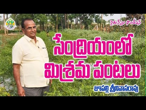Integrated Vegetable Farming By Organic Methods | సేంద్రియంలో మిశ్రమ పంటలు | contact : 98491 75755
