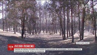 На Херсонщині вигоріло понад 40 гектарів соснового лісу