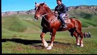 Лошади в Таджикистане