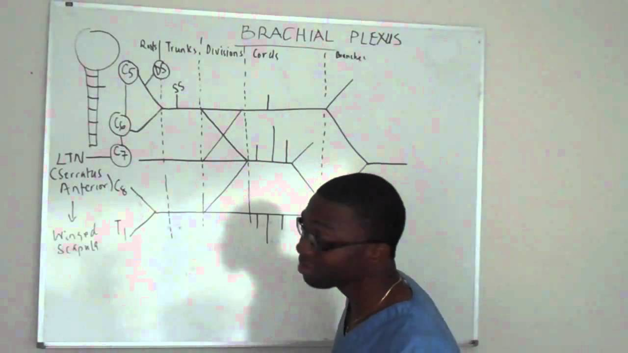 Brachial plexus made ridiculously simple PART 2 -Lecture - YouTube
