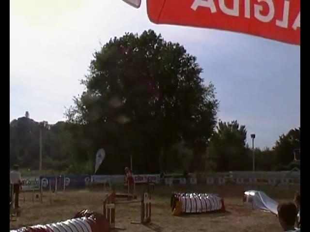 aragorn jumping domenica agility dog internazionali d'italia 2010 petrademone mucelli.MP4