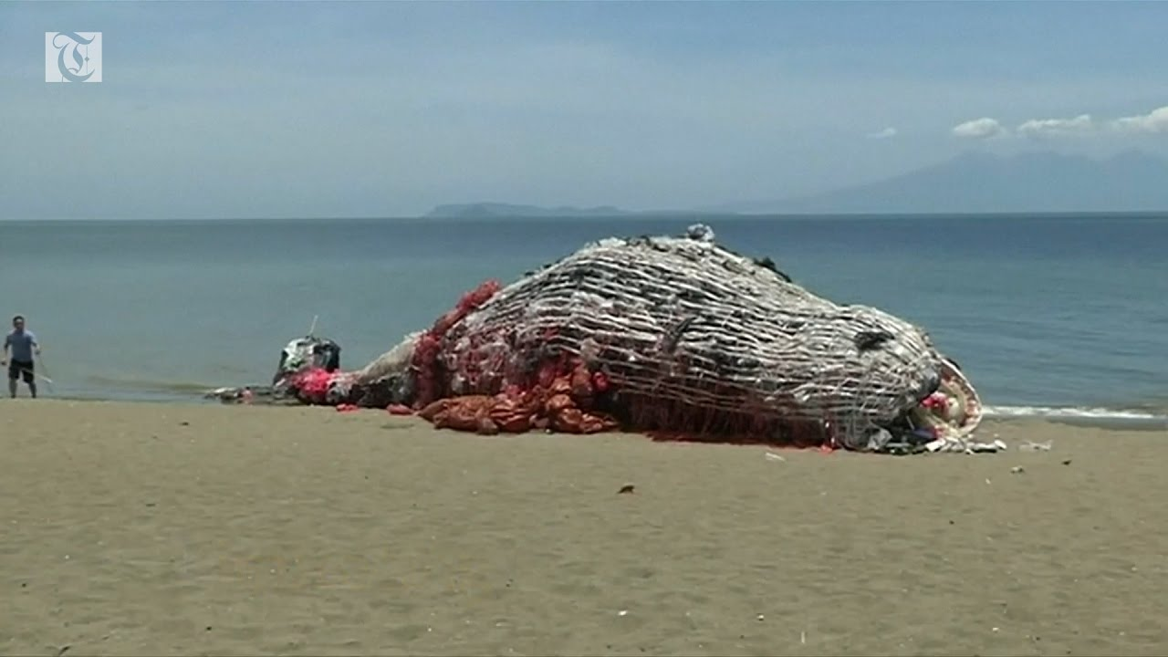 Dead whale sculpture raises awareness on plastic waste in the Philippines - YouTube