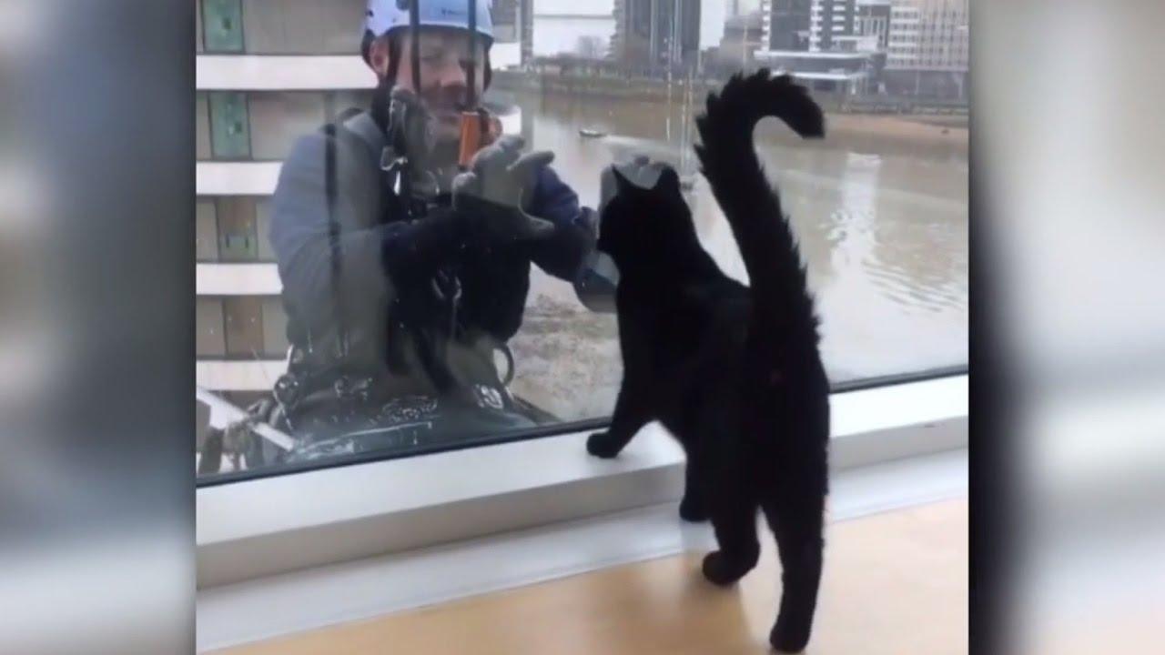 Мойщик окон развлекает кота
