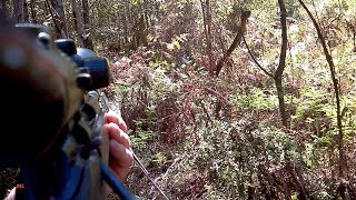 Wild dog shot at the den