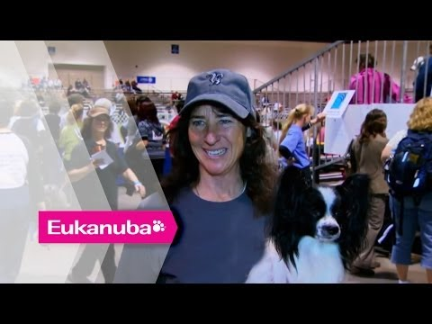 Masher the Papillion at an Agility Competition - Part 2   Extraordinary Dogs