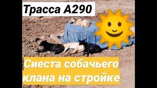 ТРАССА А290/ СИЕСТА СОБАЧЬЕГО КЛАНА/ СОБАКИ НА СТРОЙКЕ