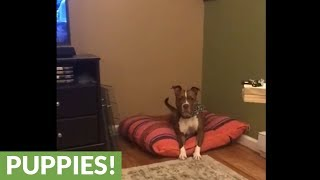 Dog flawlessly closes door on command