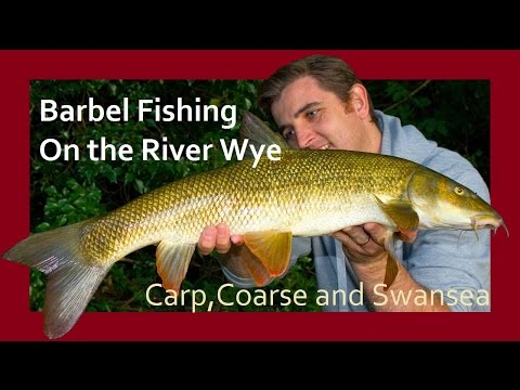 Barbel Fishing on the River Wye. Carp, Coarse and Swansea Video Blog 122.