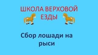 Сбор лошади на рыси