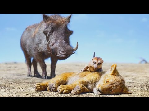 """The Lion King - Clip """"Timon & Pumba rescatan a Simba"""" Español (El rey león)"""