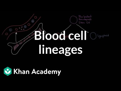 Blood cell lineages | Immune system physiology | NCLEX-RN | Khan Academy