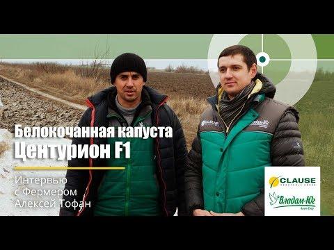 Интервью с фермером | Хранение капусты Центурион F1 Clause | Украина, Херсонская обл.