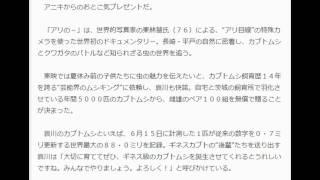 哀川翔、カブトムシ200匹プレゼント デイリースポーツ 7月4日(土)6時...