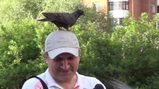 Исаак Дунаевский - Летите, голуби!