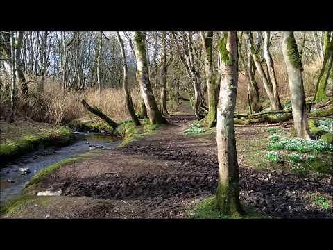 Binscarth Woods March 2018