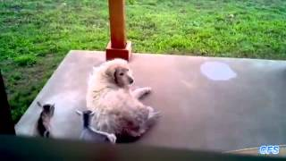 Cute Baby Goats Compilation    CFS