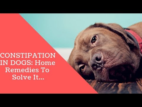 CONSTIPATION IN DOGS: Home Remedies To Solve It