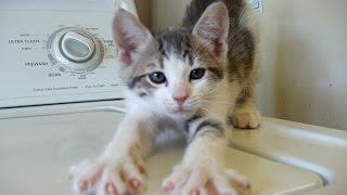 Смешные кошки 14 ● Приколы с животными лето 2014 ● Funny cats vine compilation ● Part 14