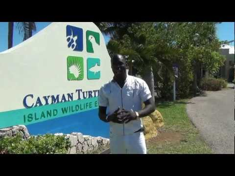 R A. Mckenzie Cayman Turtle Form Adventure (Feel free to Subscribe and Comment)