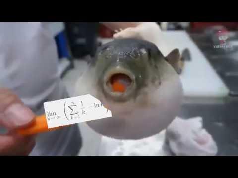 Pufferfish Eating Oily Maccaroni