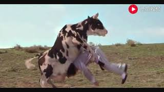 一只会功夫的奶牛,跟人类打起架来也是杠杠滴