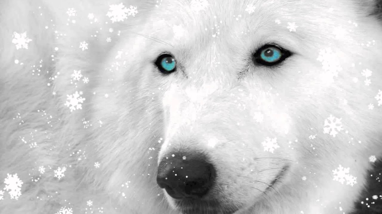 Wisdom Of The Wolf (Epic Symphonic Music)