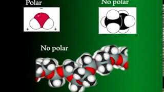 Origen y características de la química orgánica