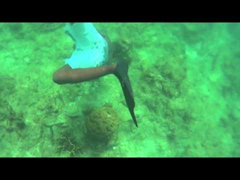 Shipwreck / Coral / Barbados / Good Times Catamaran