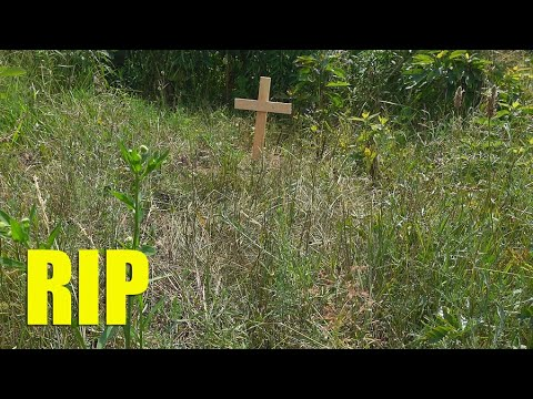 We Lost One | RIP Minnie