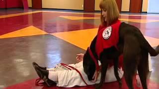 Diabetes Assist Dog Training Video