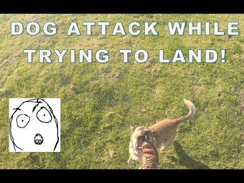Dog attacked me on landing at Torrey Pines!