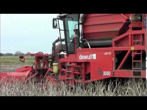 Potato harvesting. 2014.wvm