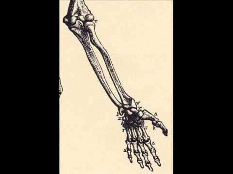 Dr Charlie Browns Hip Hop Anatomy Upper Limb Boneswmv Youtube